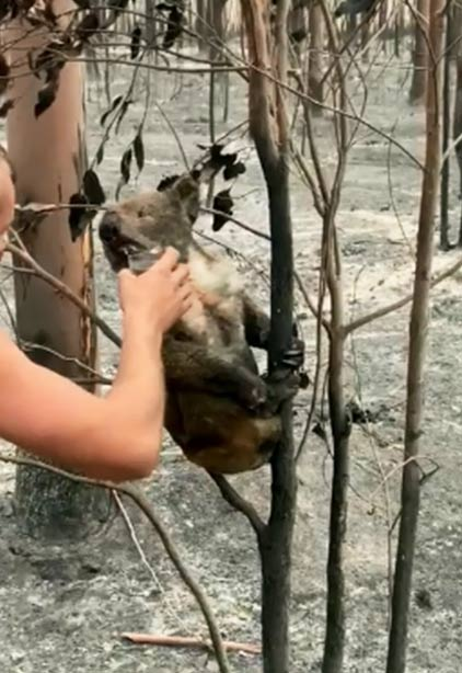 coala-patrick-1