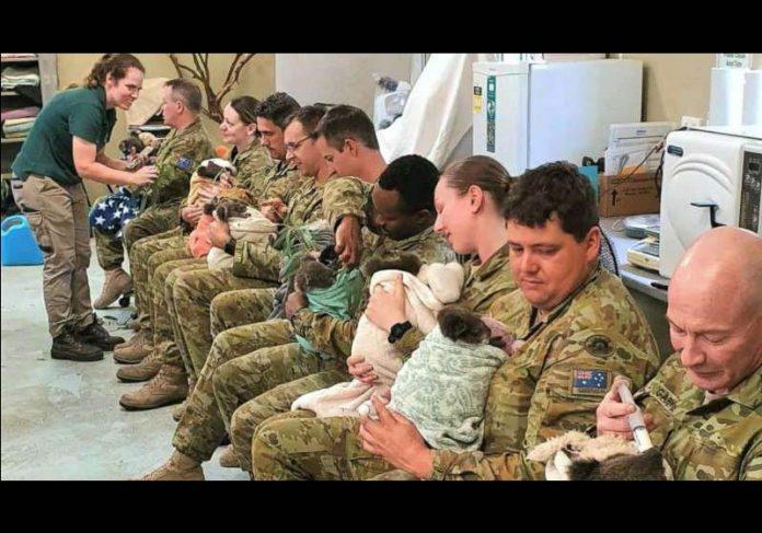 Soldados alimentam coalas órfãos - Foto: 9ª Brigada Exército Australiano / Facebook