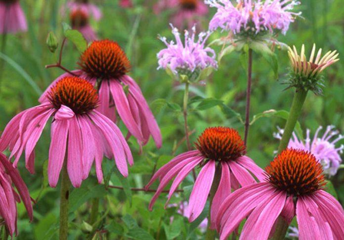 Flores silvestres para alimentar abelhas - Foto: reprodução / SunnySkyz|