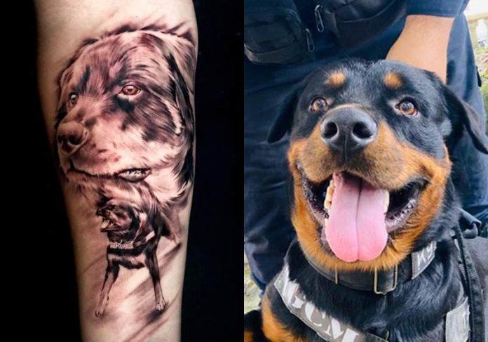 Thor vira tatuagem no braço de Hugo - Fotos: divulgação / Prefeitura de São Vicente||