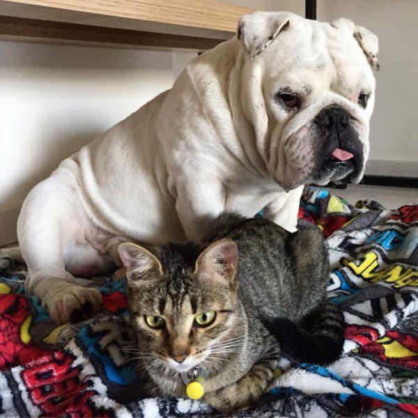 Dócil com o gatinho/irmão - Foto: arquivo pessoal