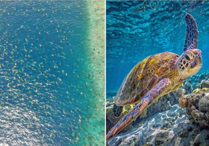 Foto: reprodução Great Barrier Reef Foundation