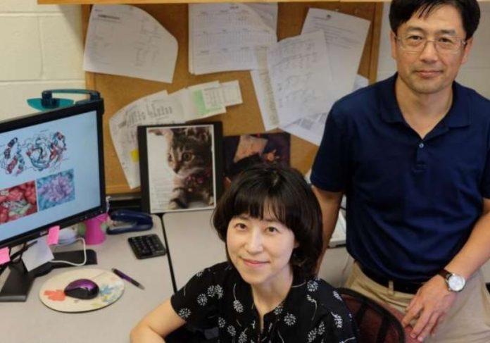 Os virologistas Yunjeong Kim e Kyeong-Ok Foto: Faculdade de Medicina Veterinária da Universidade Estadual do Kansas