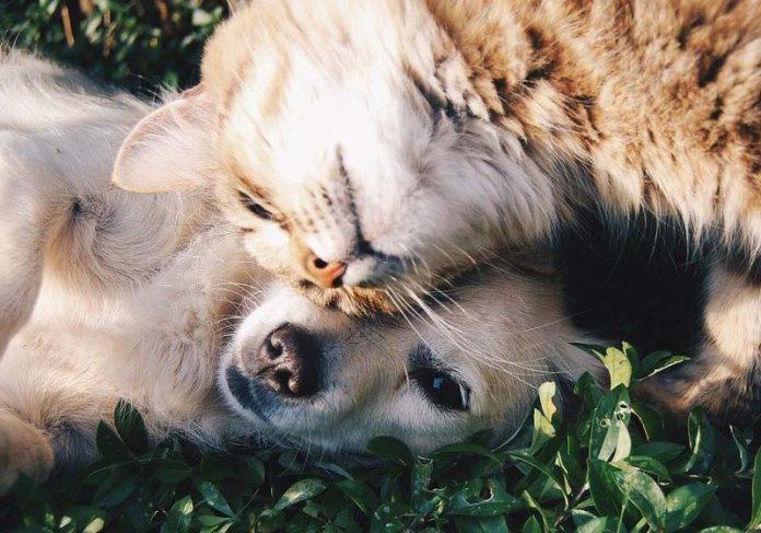 Cão e gato amigos - Foto: Pixabay