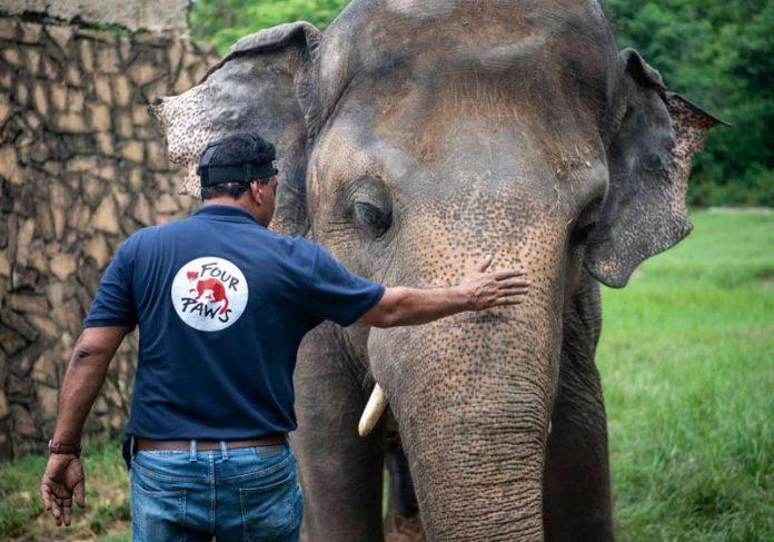 Elefante Kaavan - Foto: reprodução / Nation