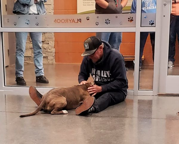 Foto: reprodução / TN Animal Shelter