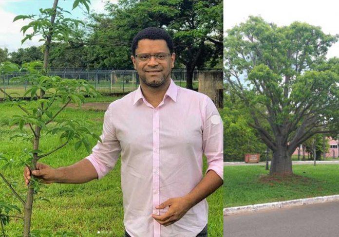 Professor André e o baobá - Fotos: reprodução / Instagram
