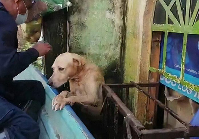 Cãozinho sendo resgatado - Foto: reprodução / Secretaria de Marinha do México