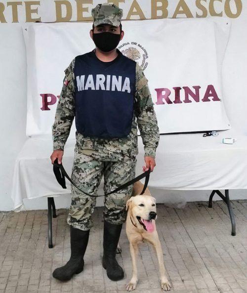 Cãozinho adotado - Foto: reprodução / Secretaria de Marinha do México