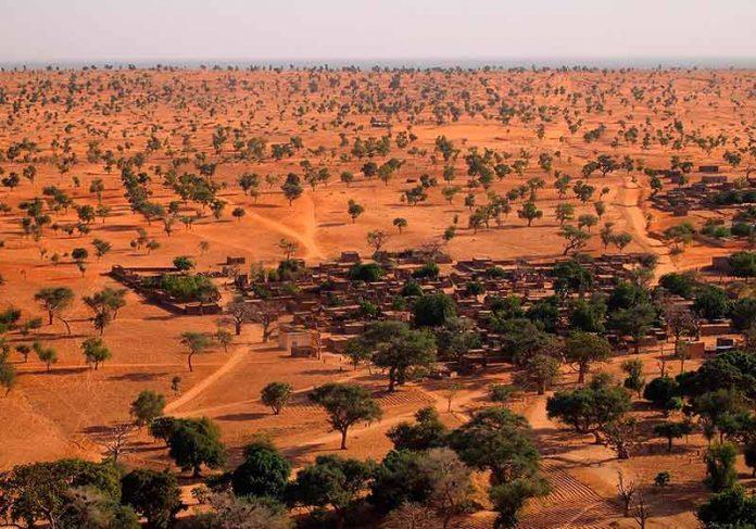 Arvores no Saara - Foto: Dr. Martin Brandt