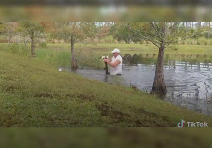 Homem tirando cão da boca de jacaré - Foto: reprodução / TikTok