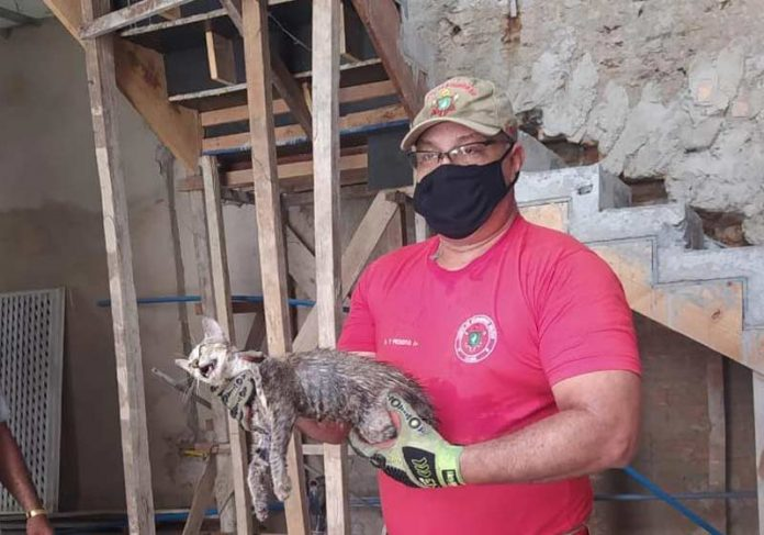 Bombeiro com o gato resgatado - Foto: divulgação