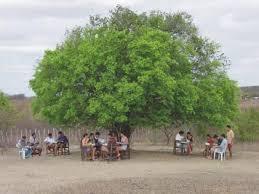 Jovens do PRECE estudando embaixo da árvore - Foto: divulgação