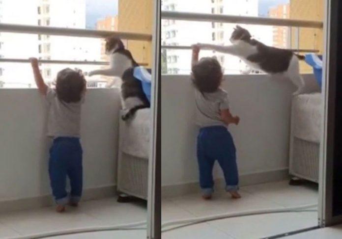 Gato impedindo menino de subir na grade - Fotos: reprodução / TikTok