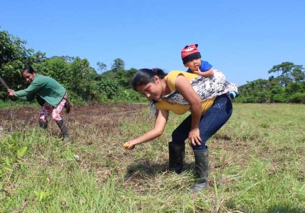 indígena cultivando árvore na Amazônia equatoriana