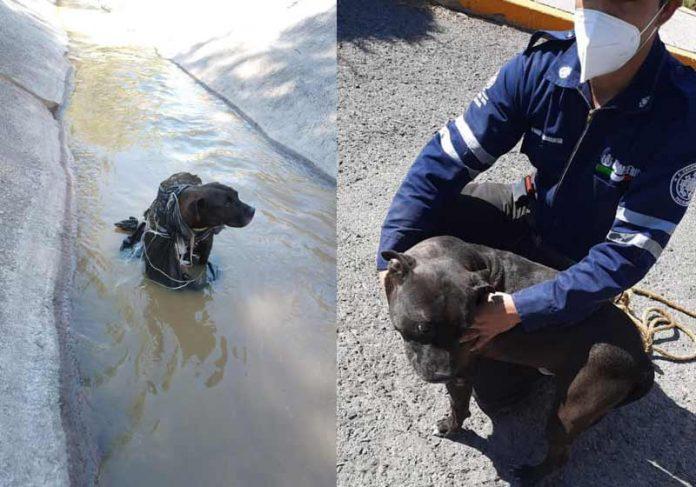Tyson foi resgatado do córrego e adotado - Fotos: reprodução / Facebook