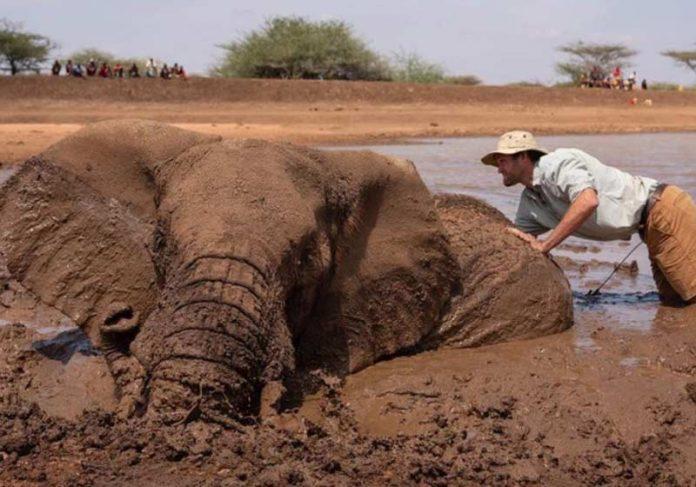 David Chancellor com a elefanta presa na lama - Foto: David Chancellor / Instagram