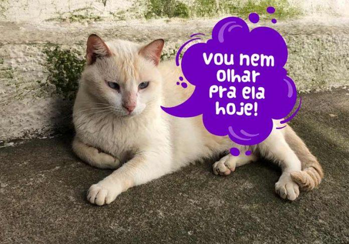 Gato para adoção na Associação Bem me Quer - Foto: reprodução / Instagram