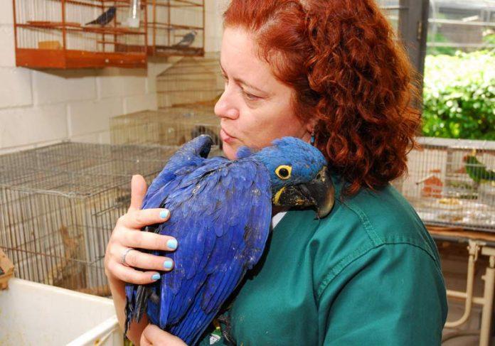 Neiva e uma arara-azul - Foto: divulgação