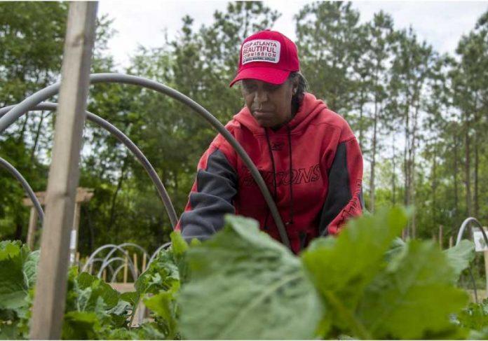 A fazenda de alimentos distribui frutas e vegetais de graça para mais de 2 mil moradores de Atlanta. - Foto: AJC
