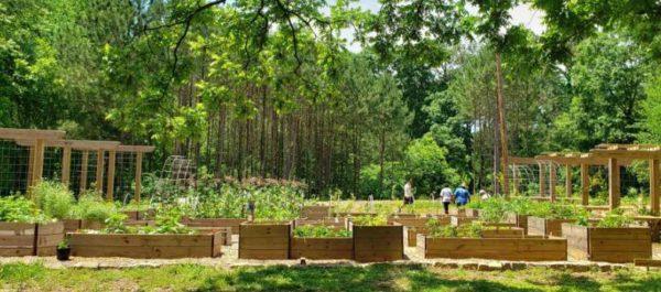 Floresta oferece frutas, vegetais e plantas medicinais para os moradores. - Foto: reprodução GNN