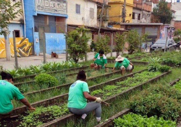 A Horta Comunitária de Manguinhos doa alimentos para toda a comunidade e moradores de rua. - Foto: reprodução