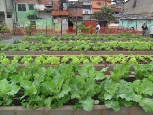 A horta de Manguinhos distribuiu mais de 2 toneladas de alimento no ano passado. Foto: reprodução Facebook Hortas Cariocas