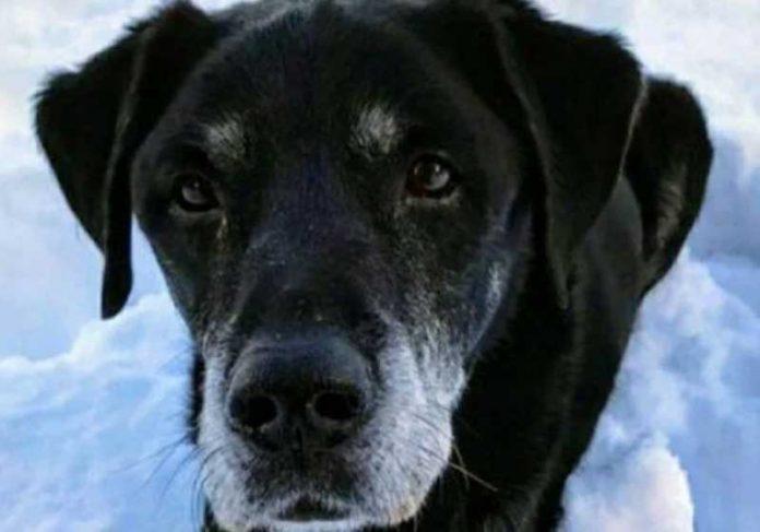 O cão salva o dono de afogamento na Escócia. - Foto: reprodução SWNS