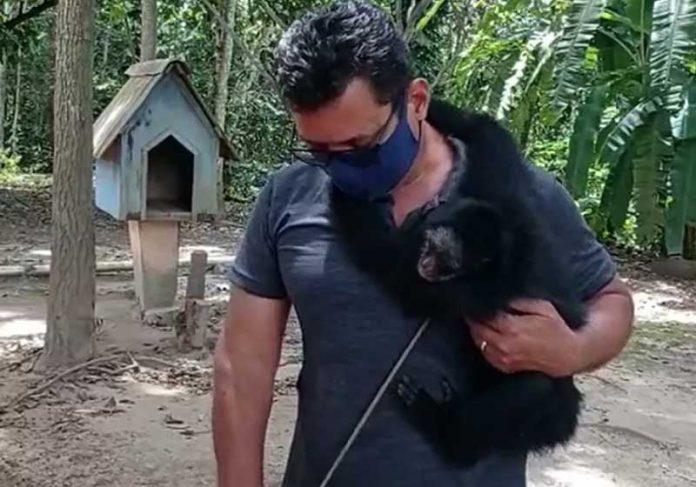 Macaco-aranha será encaminhado para um santuário — Foto: Núcleo de Fiscalização Integrada