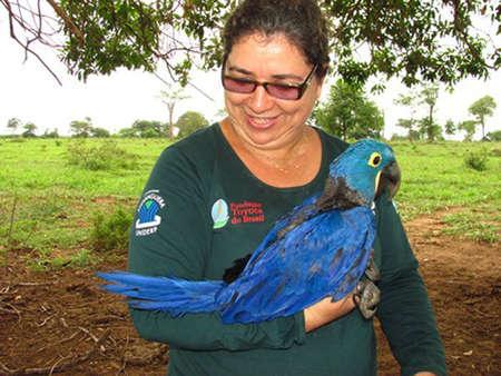 Neiva com arara-azul - Foto: divulgação