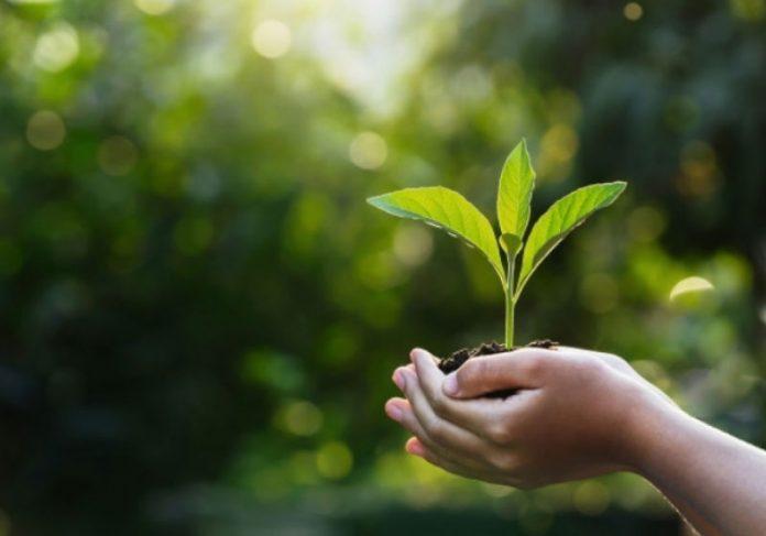 Empresa plantará uma árvore para ajudar a preservar a Mata Atlântica. - Foto: Pixabay