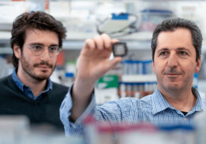 Prof.-Yaakov-Nahmias e Aaron-Cohen com o chip - Foto: Hebrew University/Divulgação