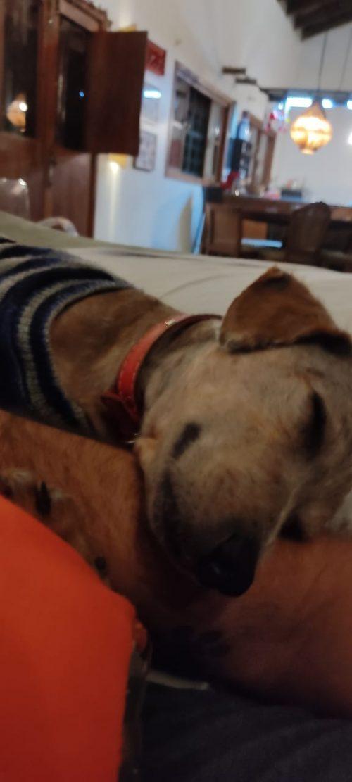 Spark tirando uma soneca no sofá - Foto arquivo pessoal