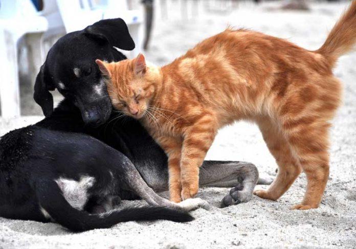 Os anticorpos contra coronavírus estavam presentes em um gato e um cão de rua. - Foto: reprodução