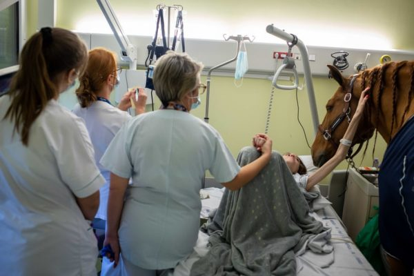 """Peyo, o cavalo """"terapeuta"""" com um paciente - Foto: Jeremy Lempin/Divergence"""