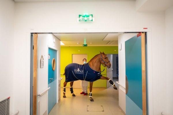 Peyo, escolhendo o quarto que quer entrar - Foto: Jeremy Lempin/Divergence