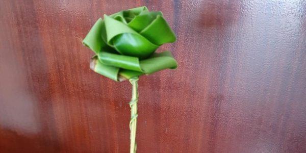 Flor que a professora ganhou. Foto: reprodução Costa Norte