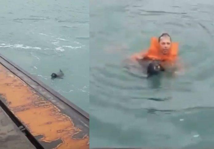 Marinheiro Marcelo Germano salvou cão que se afogava no mar - Fotos: reprodução / GovernoSP
