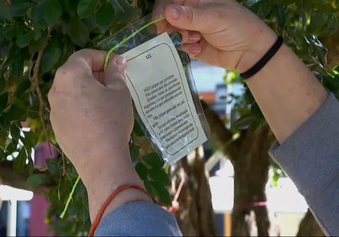As mensagens positivas em árvores são retiradas de livros. - Foto: Reprodução/EPTV