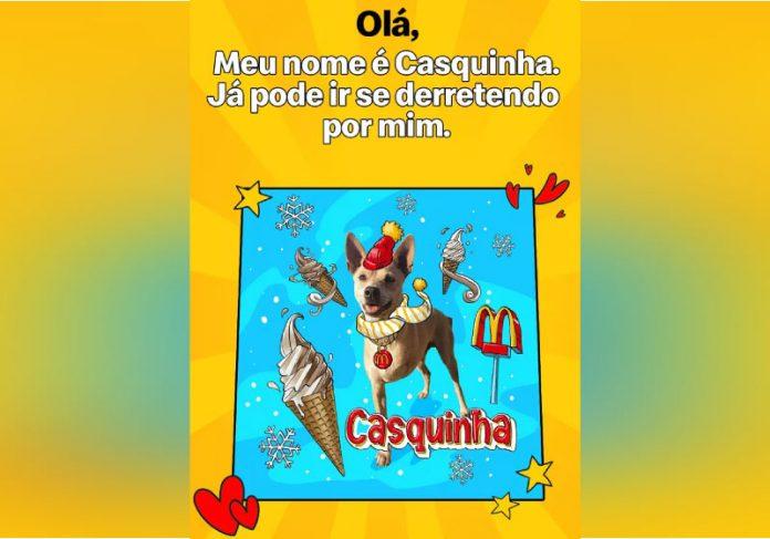 McDonalds batiza pets com nomes de lanche para incentivar adoção - Foto: divulgação