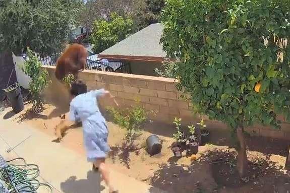 Hailey salvandos os cães. - Foto: reprodução