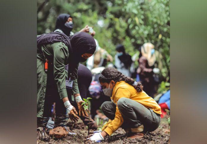 Mudas de árvores são plantadas na Índia para ajudar no reflorestamento do país - Foto: Unsplash