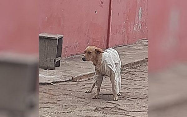 Cão ganha agasalho de jovem - Foto; Arquivo pessoal/Ana Maria de Carvalho Leite