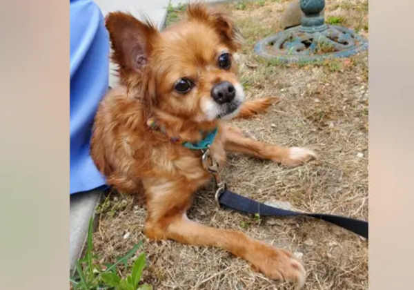 Roxy - Fotos: San Diego Humane Society