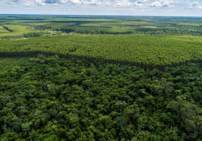 Biomas Cerrado, Mata Atlântica e Amazônia são prioridades da Suzano Foto: Divulgação