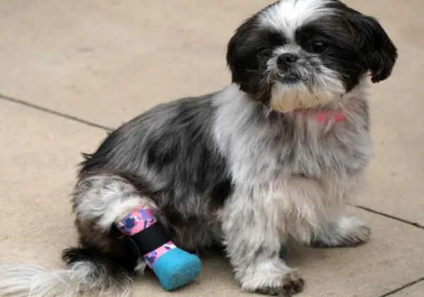 Chloe - Fotos: San Diego Humane Society