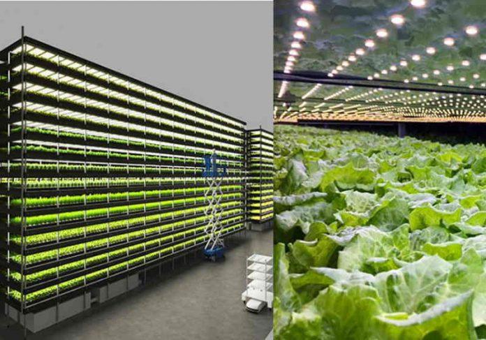 A Fazenda vertical usa energia eólica, pouco espaço, luzes LED e vai produzir mil toneladas de alimentos todos os anos Foto: YesHealth Group