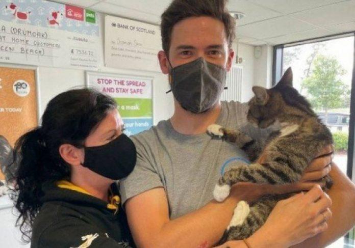 Casal recebeu uma ligação informando sobre o gato deles, desaparecido há 10 anos - Foto: arquivo pessoal