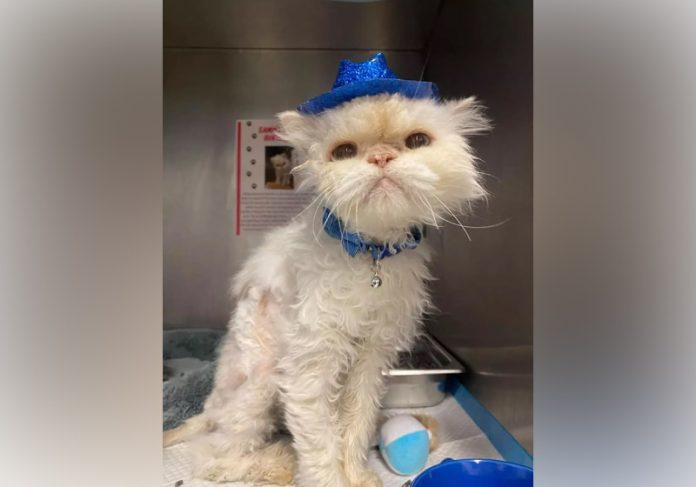 Sammy esperou 19 anos para ser adotado e ganha uma família - Foto: Cincinnati Animal Care