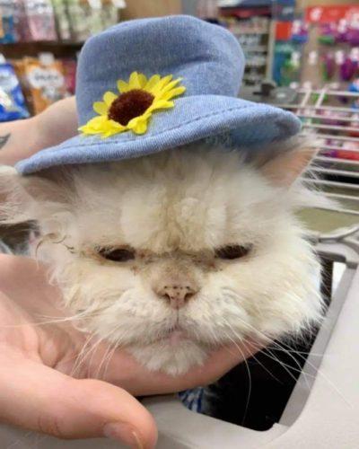 Sammy - Foto: Cincinnati Animal Care